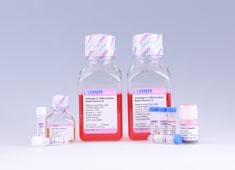 脐带间充质干细胞成脂诱导分化培养基