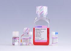 脐血间充质干细胞成骨诱导分化培养基