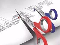 CRISPR-Cas9升级版,刷新基因编辑效率