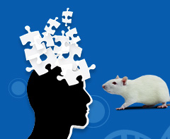 Applications of Rat Models in Alzheimer's Disease Discovery Research
