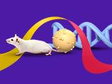Myriad of CRISPR Research Model Services