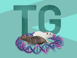 What Are Transgenic Rats