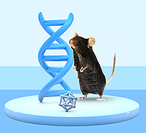 Exclusive Handbook: Choosing Suitable Animal Models for Your Research