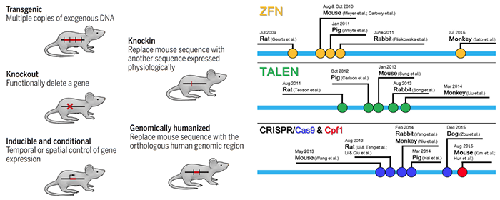 Different mouse gene editing methods and technologies