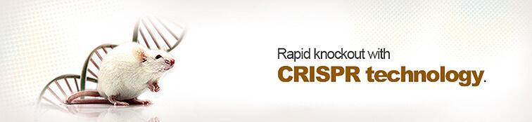 Knockout Rats | Rapid knockout with crispr technology | Cyagen US Inc.