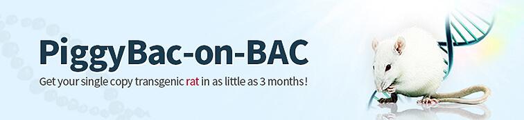 PiggyBac-on-BAC Transgenic Rats
