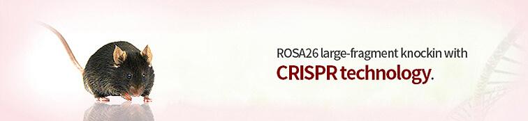 Large-fragment Knockin Mice (ROSA26)