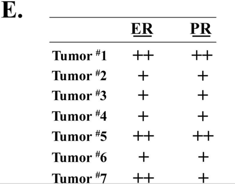 Cyagen - 3 SIRT3 is a mouse tumor suppressor in mitochondria