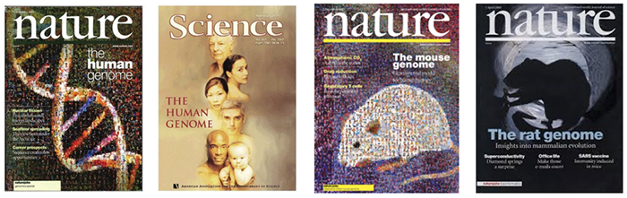 The draft of mouse and rat genomes are published in top journals following the draft human genome