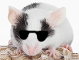 Three (formerly) blind mice
