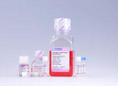 Mesenchymal Stem Cell Osteogenic Differentiation Medium GUXMX-90021