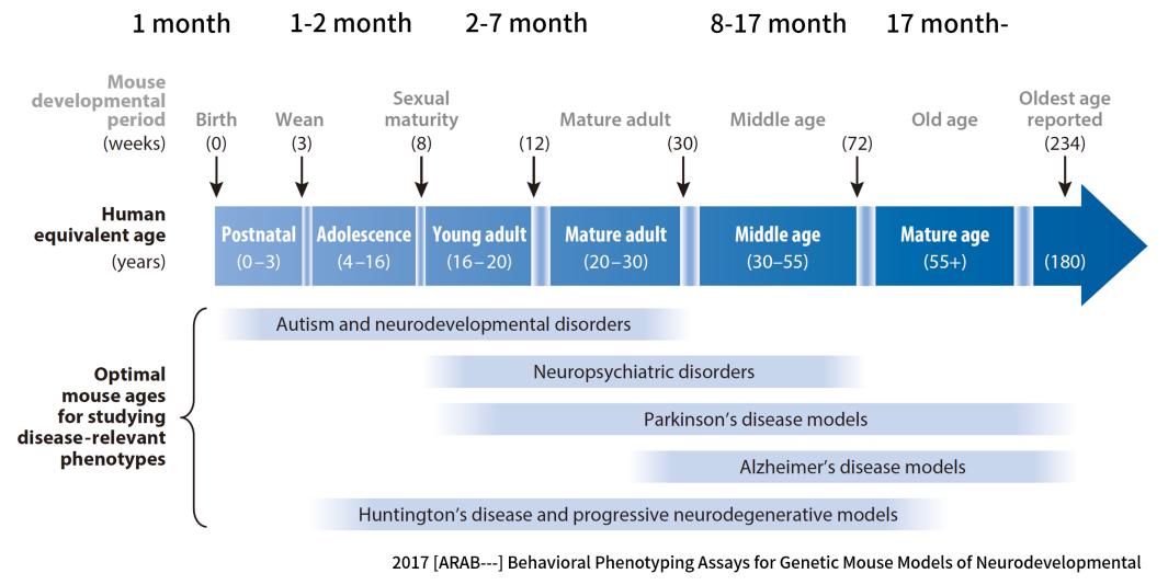 Cyagen | Figure 6. Mice - human age relationships in neurodegenerative diseases