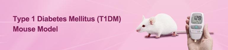 Type 1 Diabetes Mellitus (T1DM) Mouse Model
