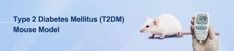 Type 2 Diabetes Mellitus (T2DM) Mouse Model
