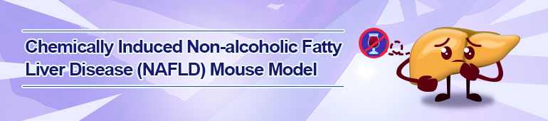 Chemically Induced Non-alcoholic Fatty Liver Disease (NAFLD) Mouse Model