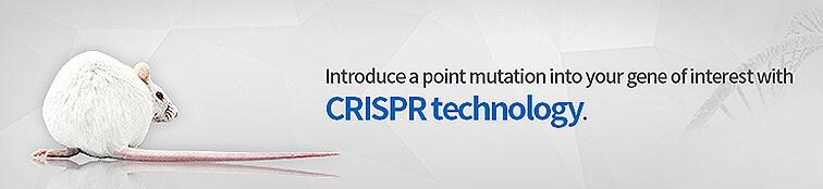 crispr point mutation rats   Cyagen
