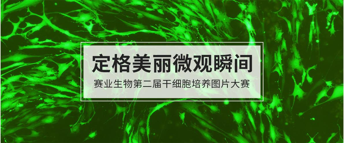 定格美丽微观瞬间 赛业生物第二届干细胞培养图片大赛