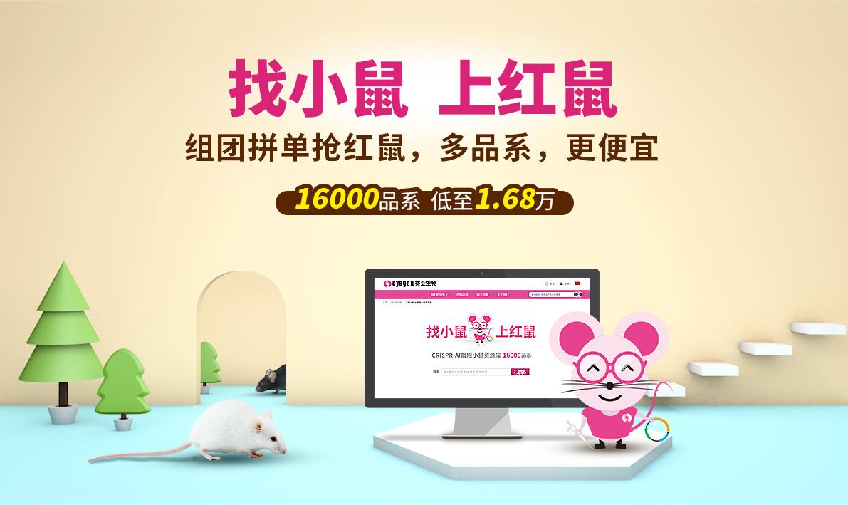 找小鼠 上红鼠  组团拼单抢红鼠,多品系,更便宜  16000品系  低至1.68万