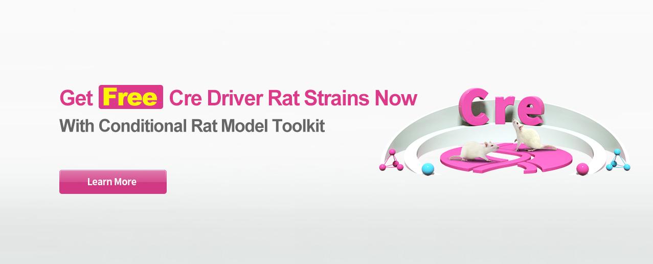 Rat Models cKO | cKI